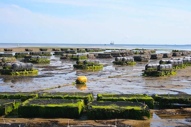 oyster-farm-EU-aquaculture