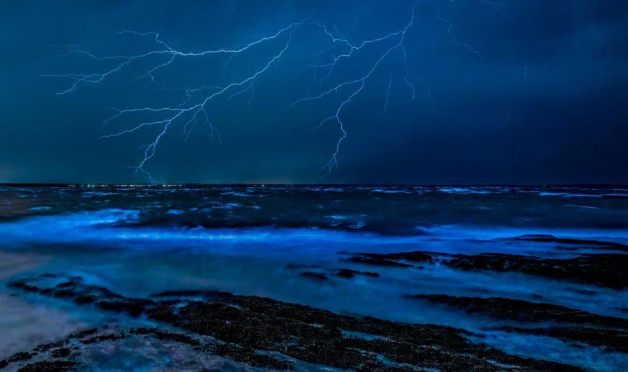 bioluminescent-micro-organisms