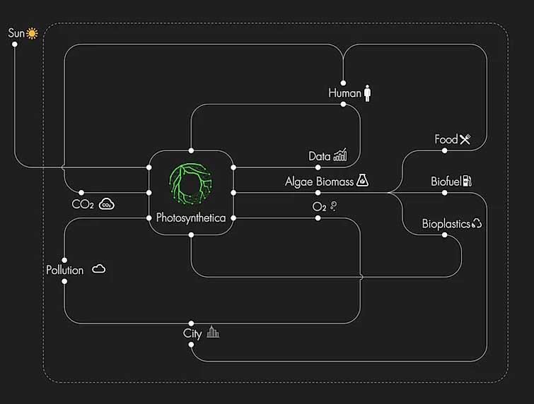 PhotoSynthetica cycle