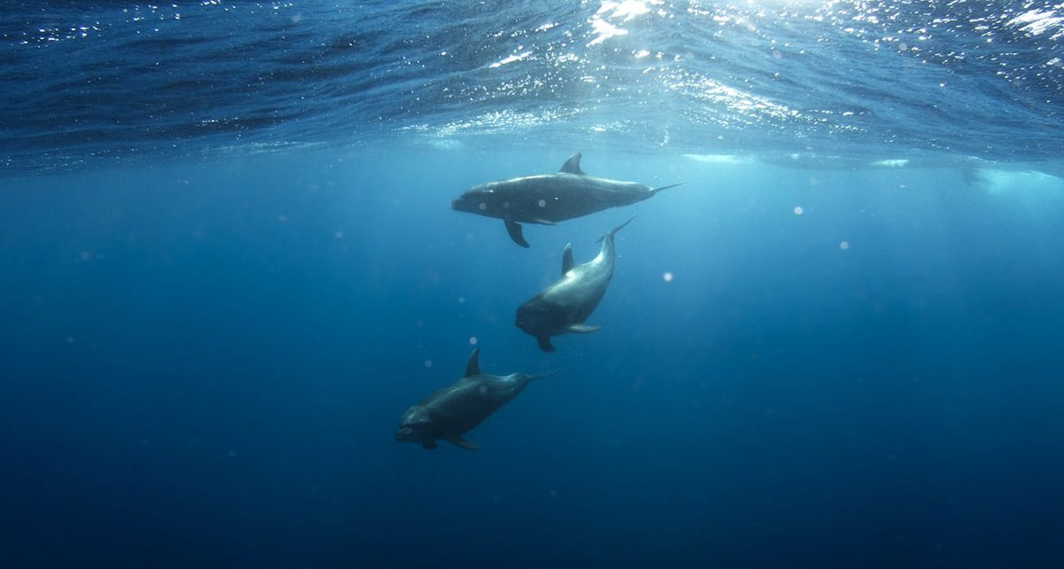protection of marine mammals